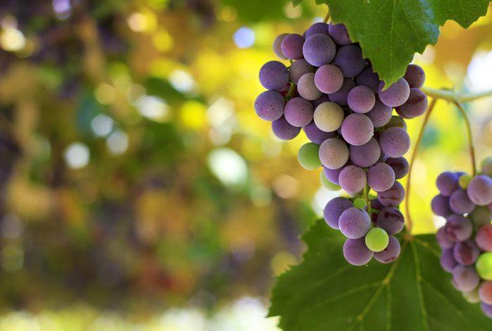 Goûtez les vins du Domaine des Côtes d'Ardoise.