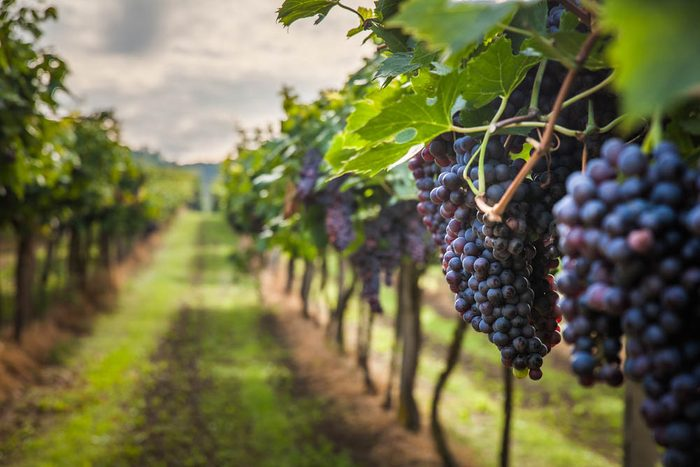 Route des vins : passez par le Domaine du Ridge.