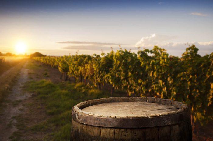 Route des vins : visitez le vignoble Gagliano.