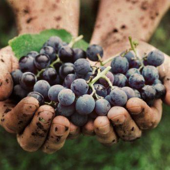 La route des vins au Québec: les meilleurs vignobles québécois