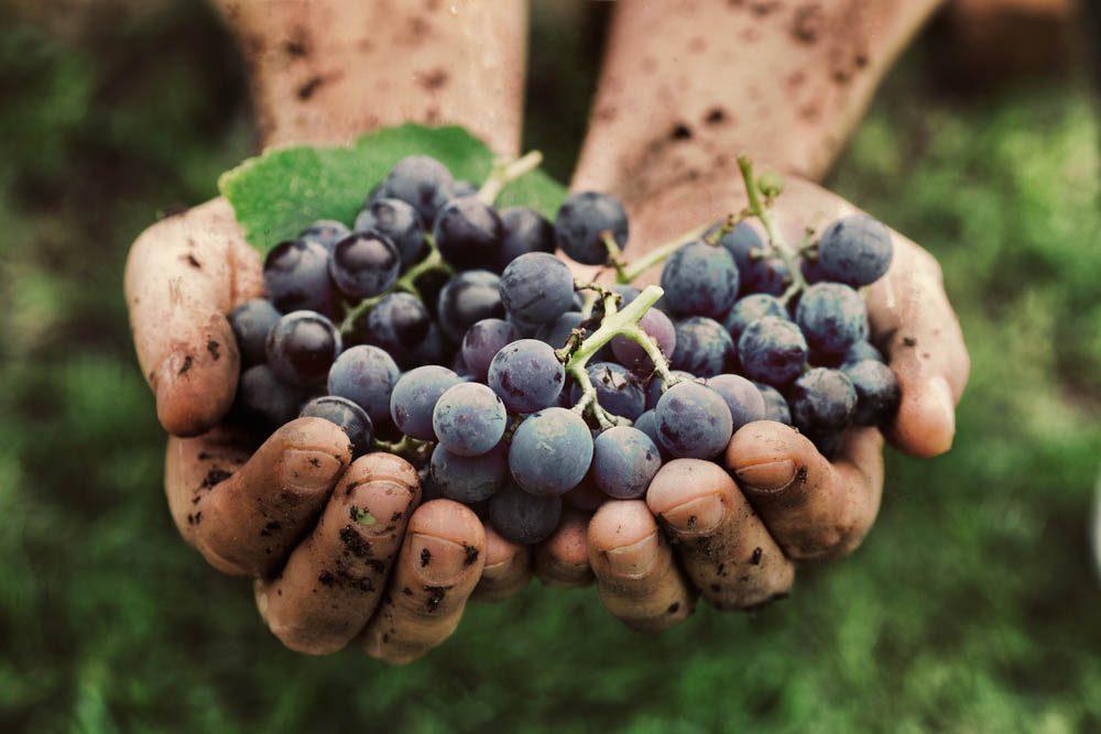 Route des vins : passez par le vignoble Les Pervenches.