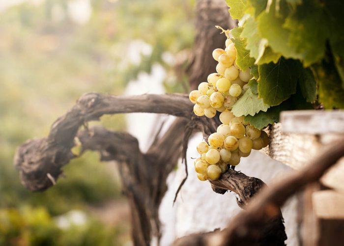 Route des vins : visitez le Vignoble de l'Orpailleur.