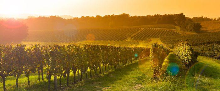 Découvrez la route des vins et les meilleurs vignobles qui s'y trouve.