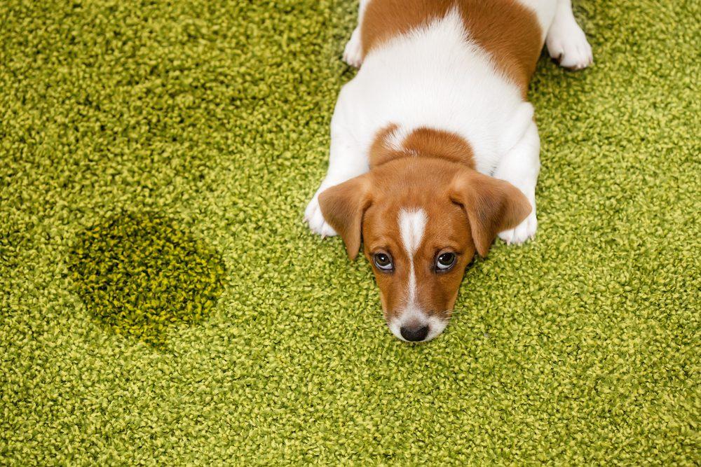 Éliminer les odeurs de votre animal de compagnie avec du vinaigre et du bicarbonate de soude.