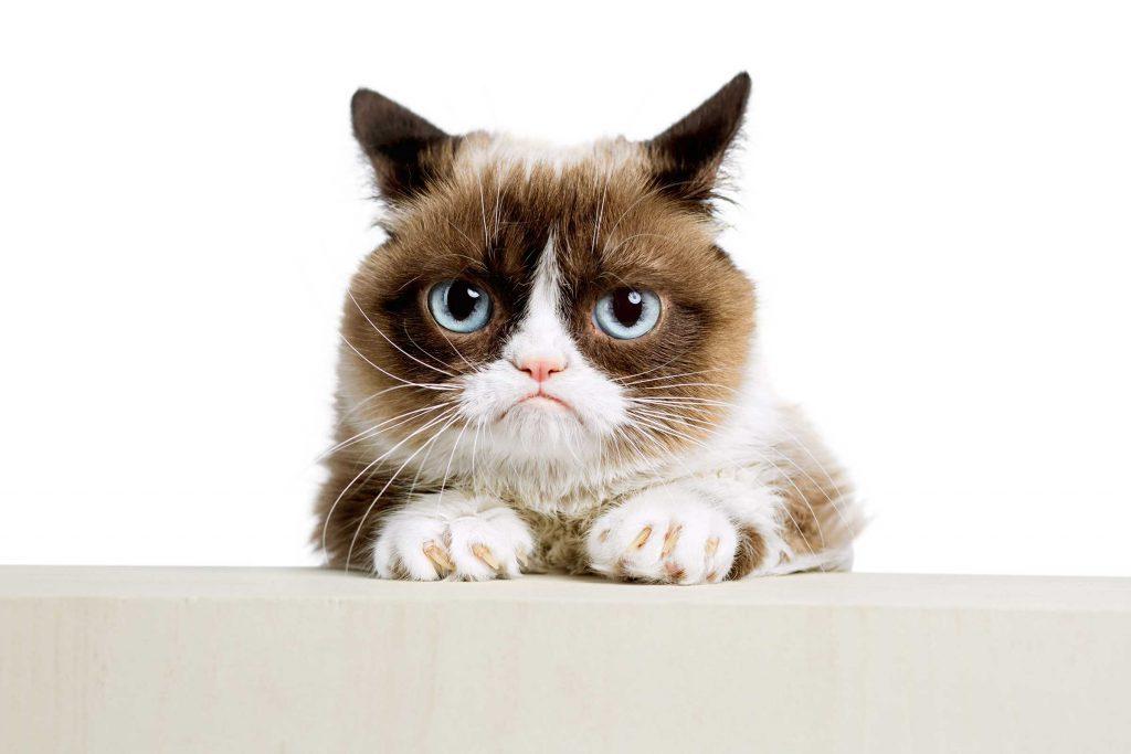 Les animaux affiche des signes de comportements amicaux, la seule espèce qui ne manifeste absolument aucun signe de réconciliation, c'est le chat domestique.