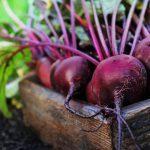 Betterave : un légume des plus polyvalent en cuisine