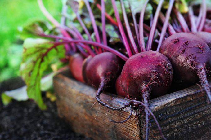 La betterave est un légume des plus polyvalent.