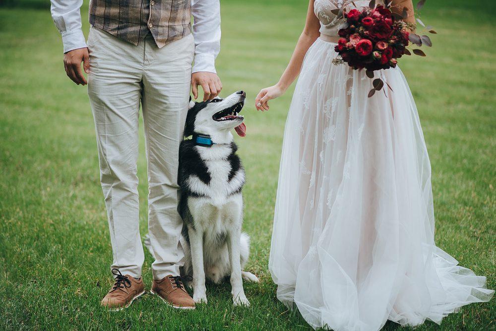 Votre chien peut sentir lorsque vous vous chicanez avec votre conjoint.