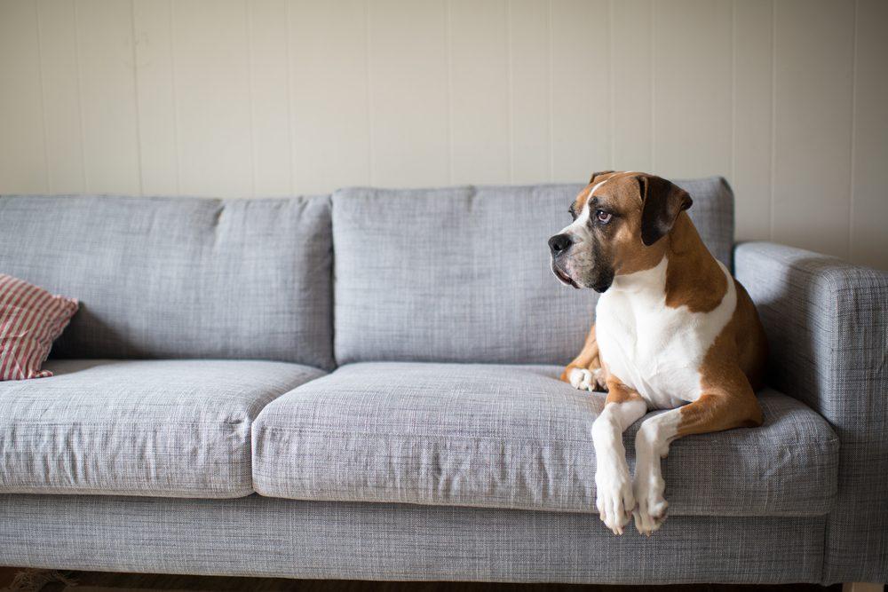 Les chiens lisent très bien le langage corporel de leur maitre.