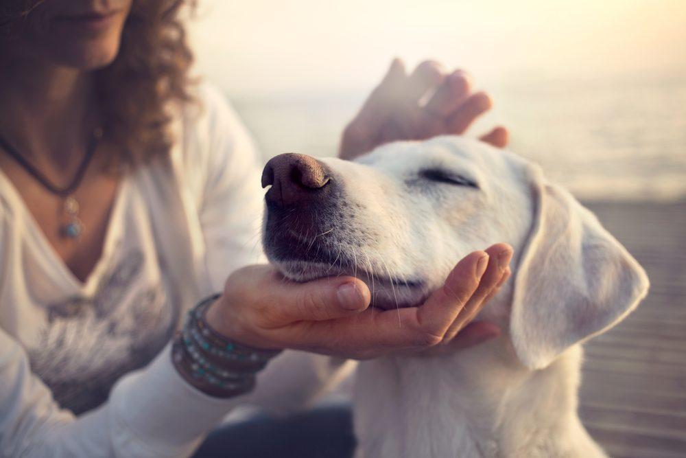 Les chiens savent détecter la générosité des gens.
