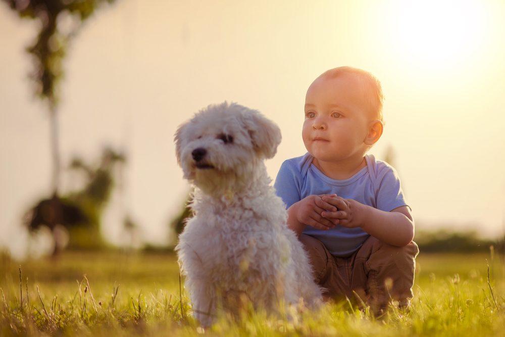 Votre chien sait que votre bébé est le plus vulnérable de sa meute et il le protègera.