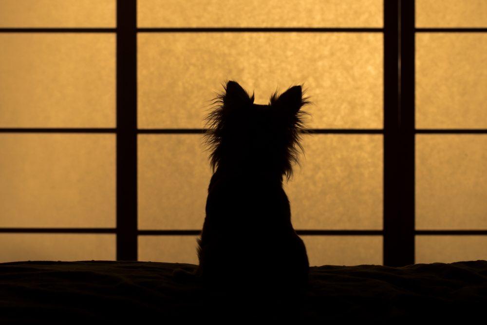 Les chiens connaissent votre emploi du temps et savent quand vous rentrez à une heure inhabituelle.