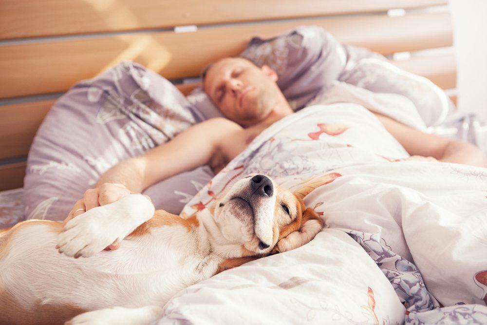 Les chiens peuvent être entrainé à flairer certaines infections et maladies.