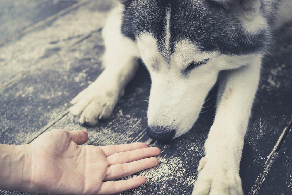 Les chiens peuvent sentir toutes les odeurs qui sont sur vous et sur vos vêtements.