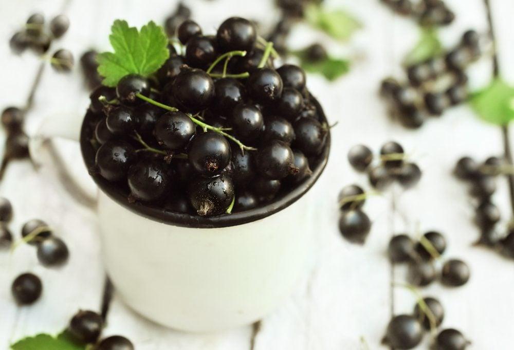 Cassis: un fruit riche en antioxydants aux nombreux bienfaits et vertus santé.