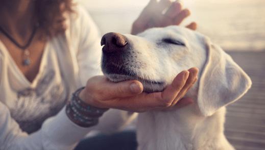 Chiens: Les 13 secrets que votre chien connaît sur vous