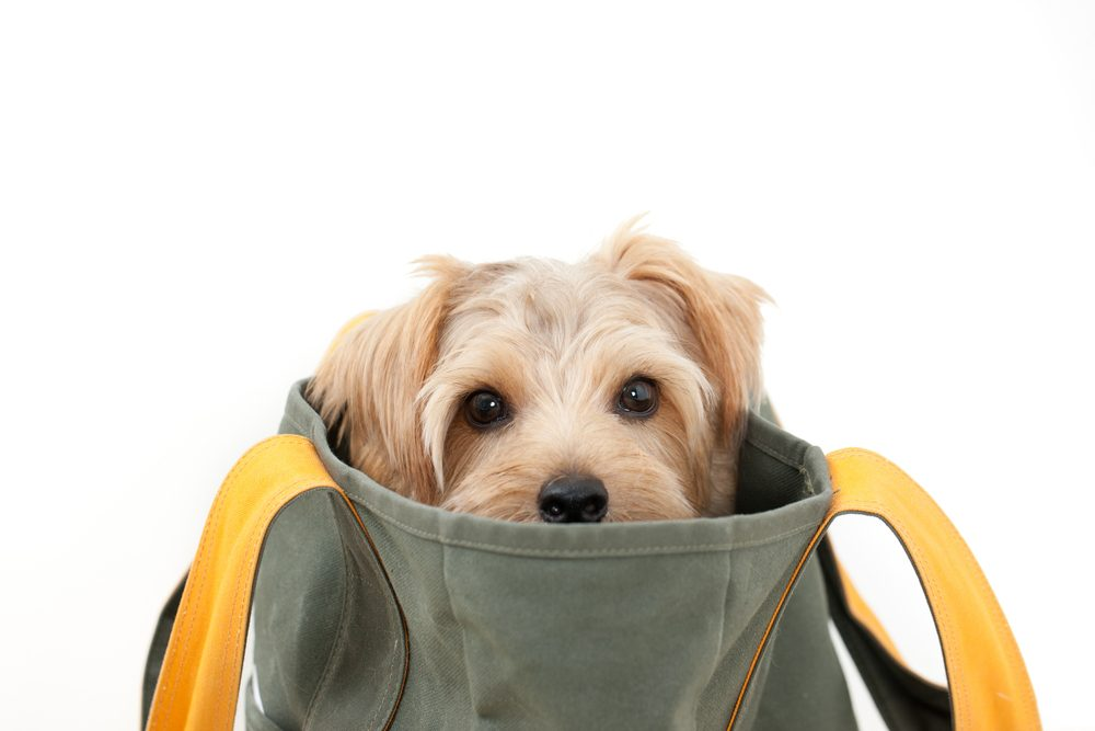 Les chiens n'aiment pas quand leur maitre s'en vont et sentent leur départ.