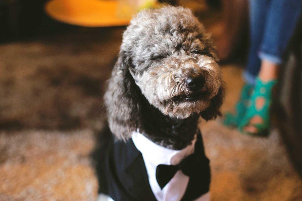 Animal de compagnie : Vous leur construisez une garde-robe pour leurs vêtements