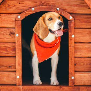 Animaux domestiques: 7 signes que vous les aimez (peut-être) trop!