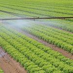 OGM: Faut-il s'inquiéter des organismes génétiquement modifiés?