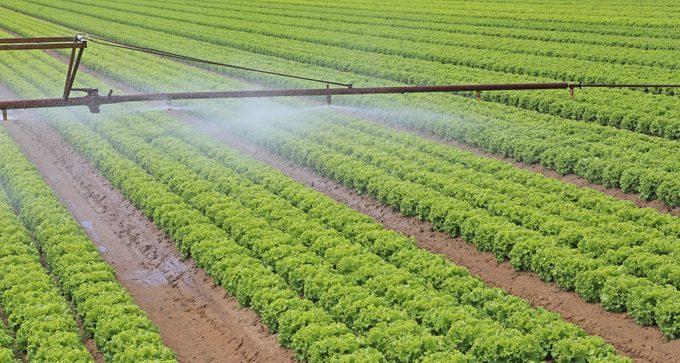 Pour ou contre les organismes génétiquement modifiés (OGM) dans les aliments?