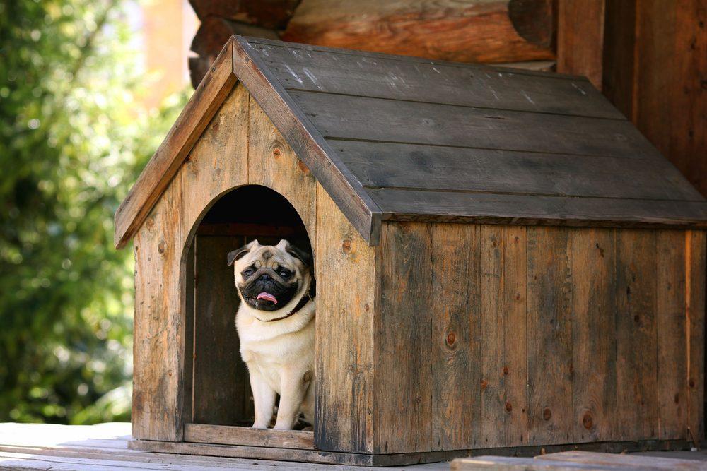 Améliorez le confort de la niche de votre chien avec du papier bulle