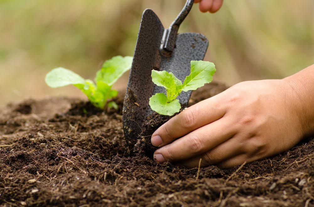 Protège les jeunes arbres avec du papier bulle