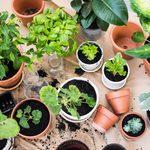 21 astuces de jardinage pour réussir son potager