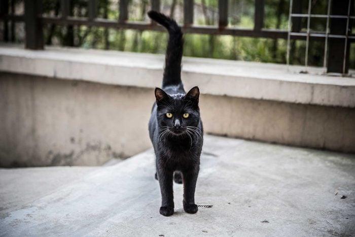 Il existe plusieurs dictons et superstitions à propos des chats.