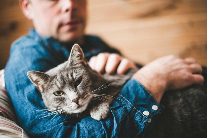 Les chats ne sont pas des animaux affectueux.