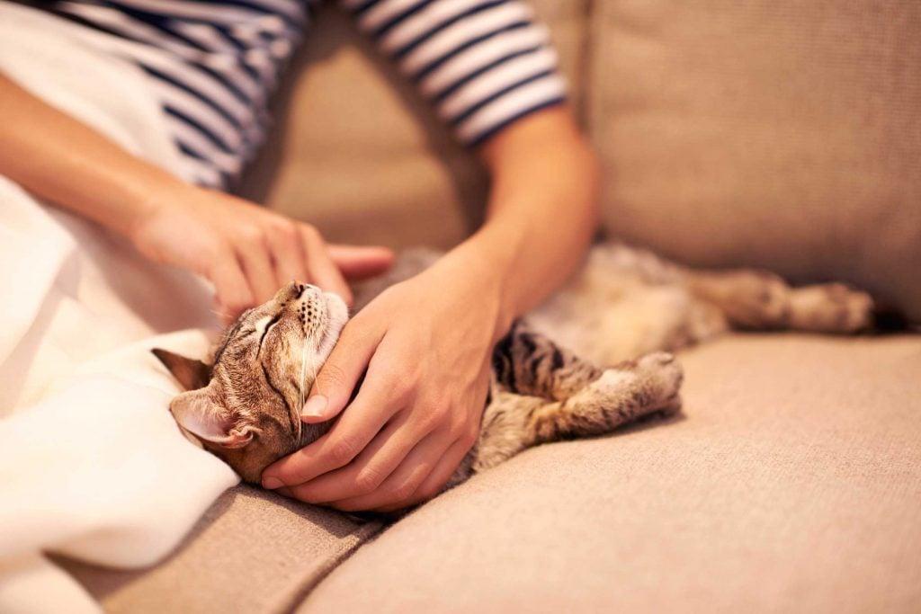 Les chats n'aiment pas qu'on leur flatte le ventre.