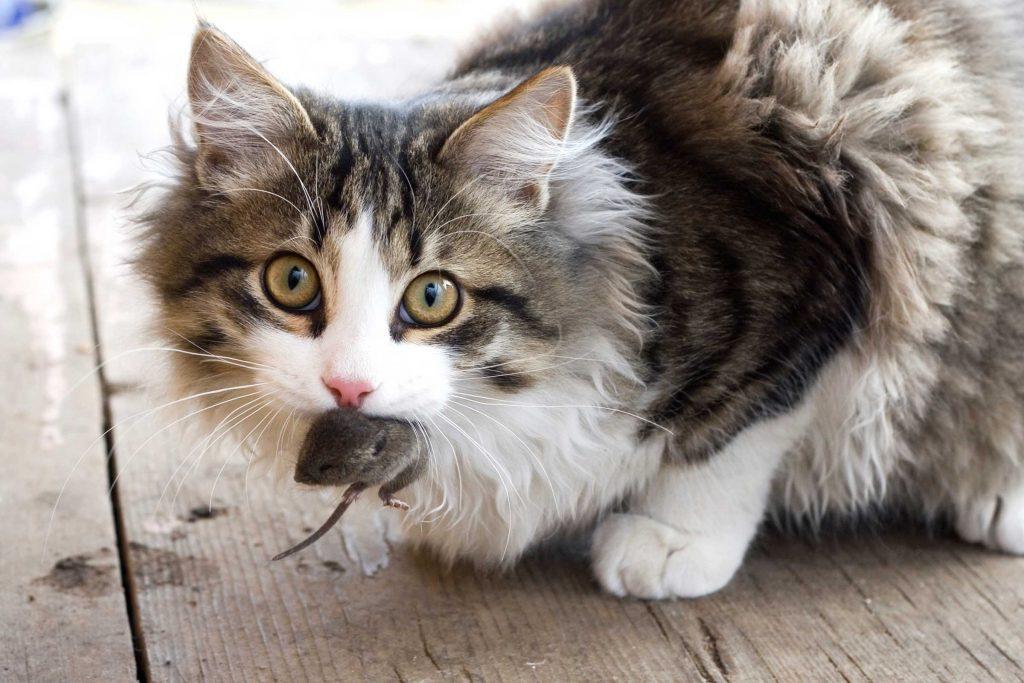 Si votre chat vous amène un petit animal mort, il s'agit d'un cadeau.
