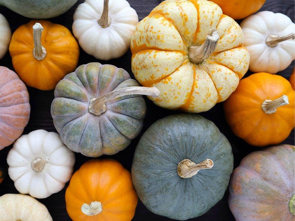 Aliments frais : Pas de courges ni de citrouilles avec les pommes et les poires