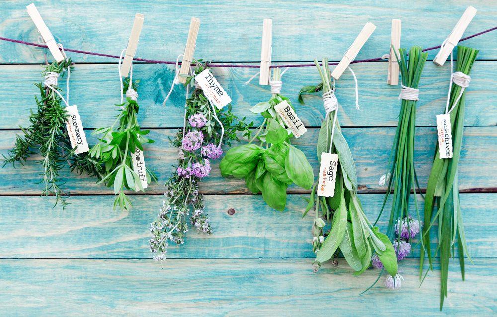 Aliments frais: traiter vos fines herbes comme des fleurs