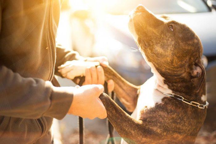 Votre chien vous aime, lorsqu'il suit vos habitudes