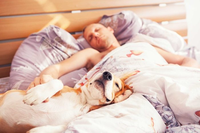 Votre chien dort dans votre lit