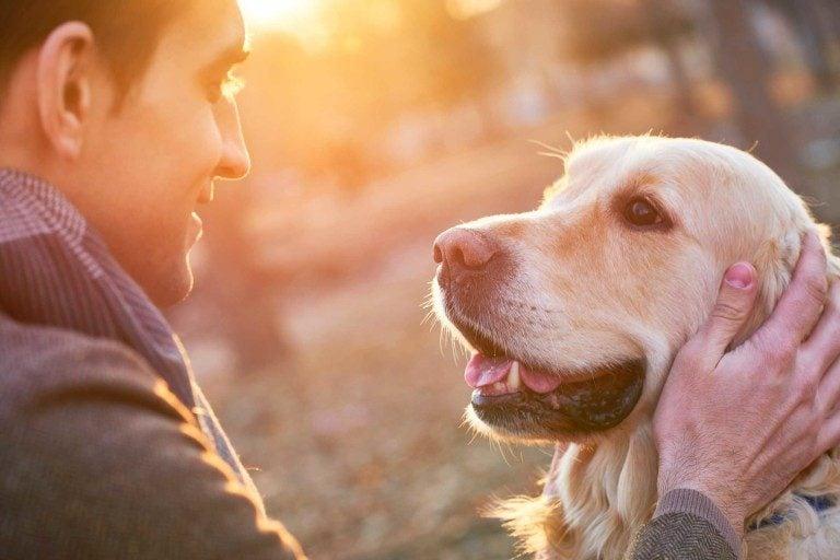 Votre chien vous regarde dans les yeux