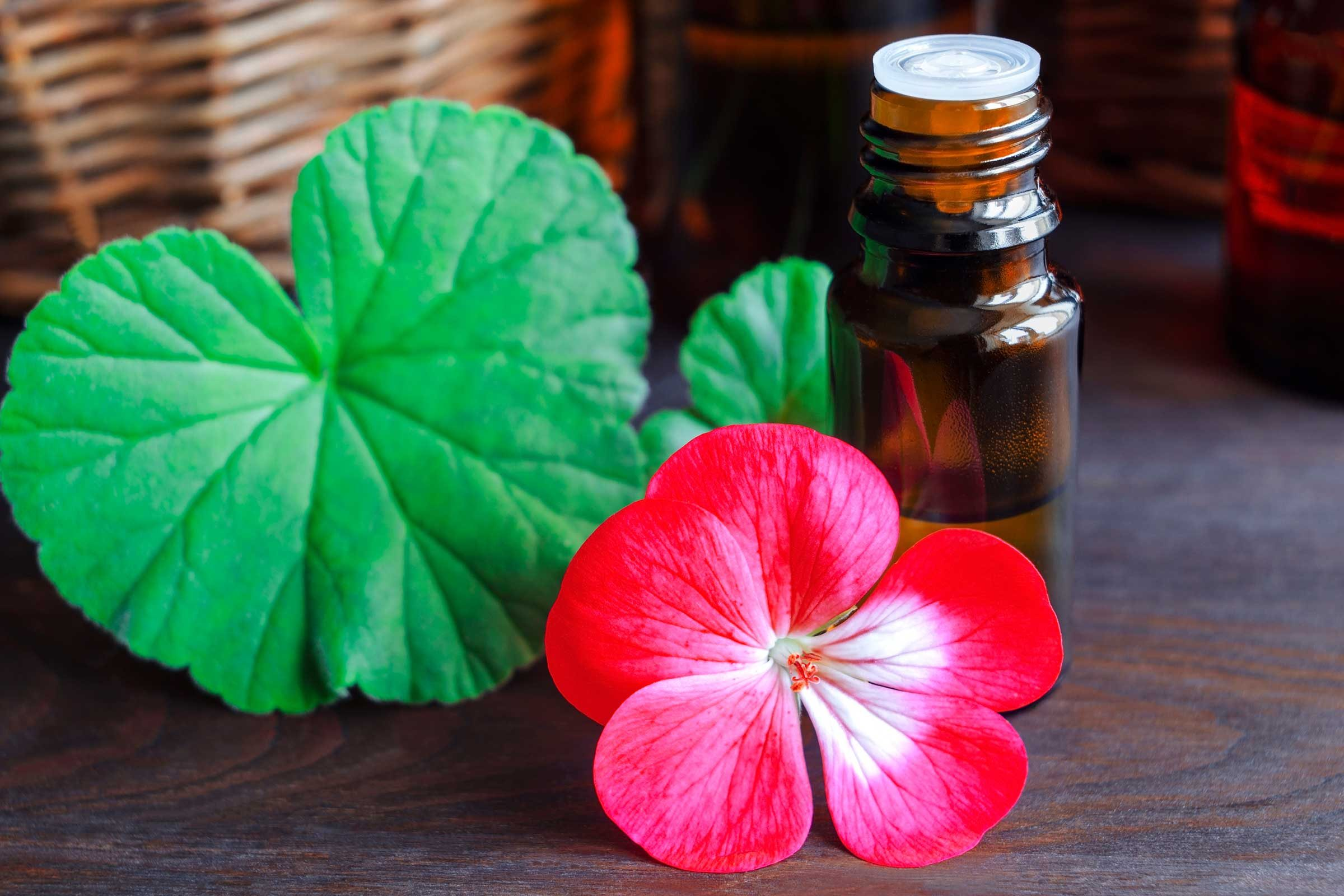 L'huile de géranium pour traiter les imperfections cutanées