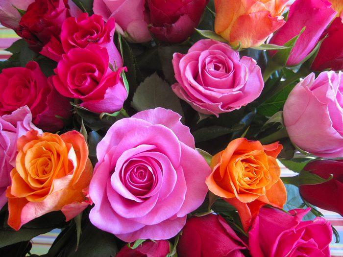Fête des Mères: offrez-lui des roses.