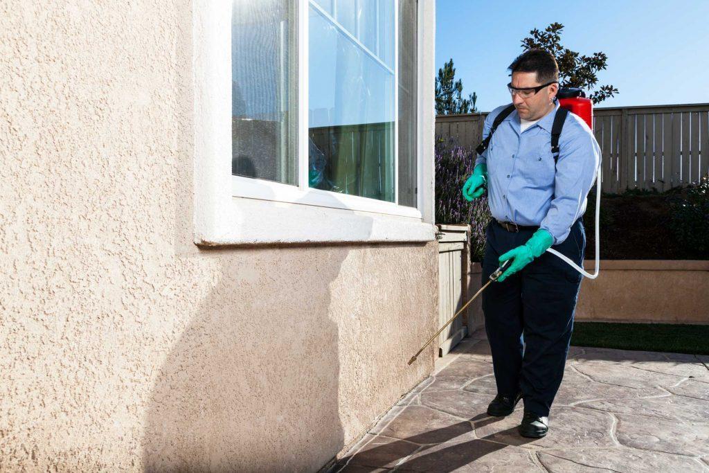 Si l'infestation de fourmis devient hors de contrôle, faites appel à un exterminateur.