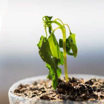8 trucs pour ressusciter une plante morte