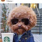 Instagram : 15 chiens populaires à suivre