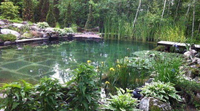 Un bassin de baignade écologique