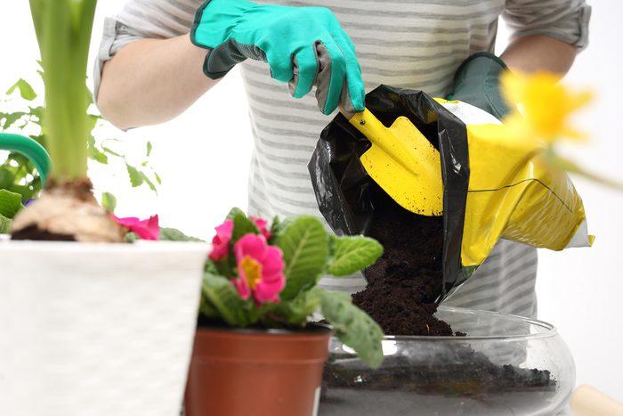 Assurez-vous de nourrir votre plante avec le bon engrais.