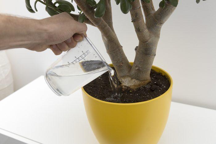 Vous pouvez ajouter de l'engrais dans l'eau de vos plantes.