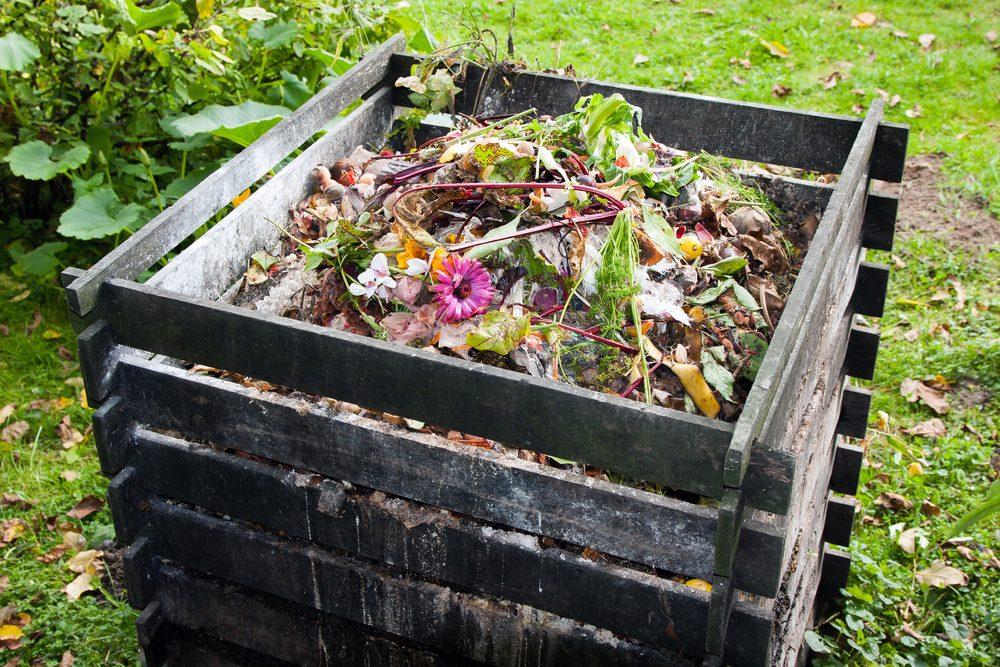 Si vous n'arrivez pas à ressusciter votre plante morte, faites-en du compost.