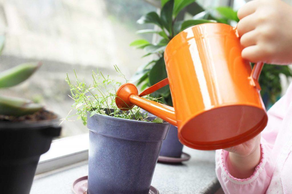 Arrosez donc vos plantes d'intérieur quand vous avez un peu de temps.