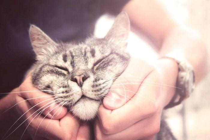Utiliser le chat pour sa demande en mariage