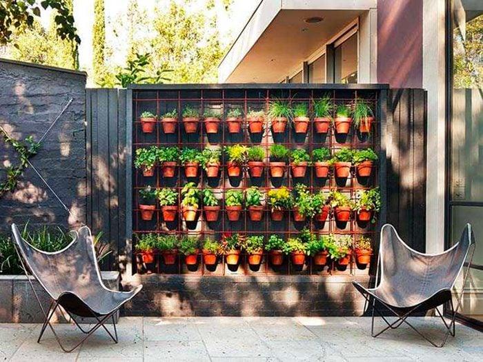 Jardin de rêve: un mur vert en ville.
