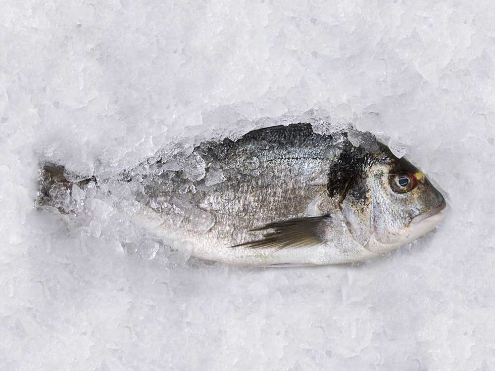 Micro-onde-aliments-poisson